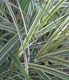 Two-Gallon Perennials and Grasses