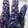 Delphinium 'Magic Fountains Mix' gallons (Larkspur) [ID#1578]