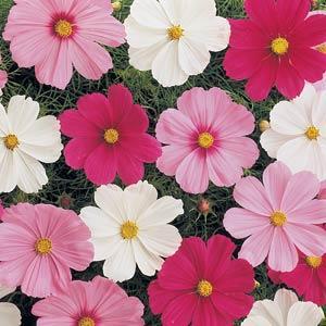 Annual Flats, 48 plants per flat
